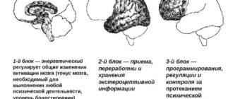 Функциональные блоки мозга, участвующие в акте письма (по А. Р. Лурия)