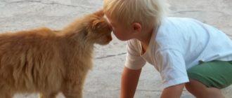ребенок кошка