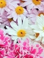 Конспект занятия по теме Цветы