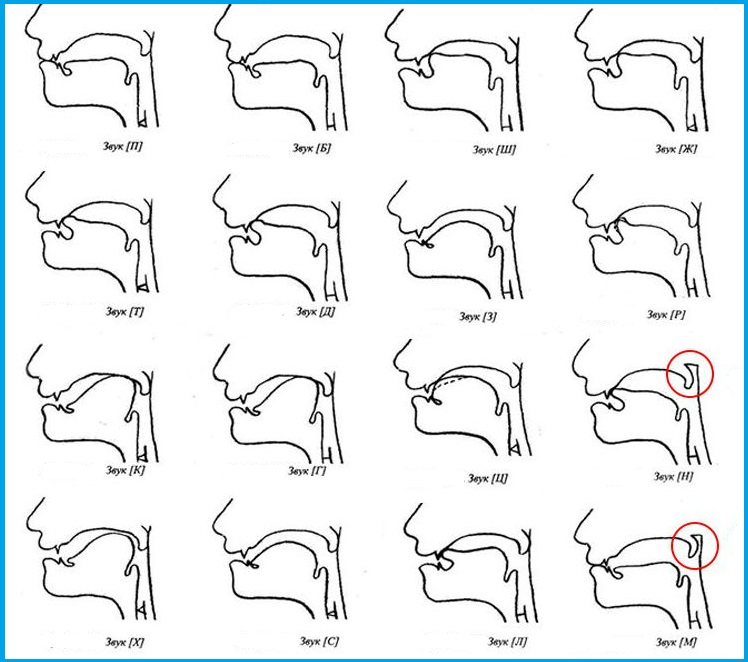 Артикуляция звуков в графическом изображении